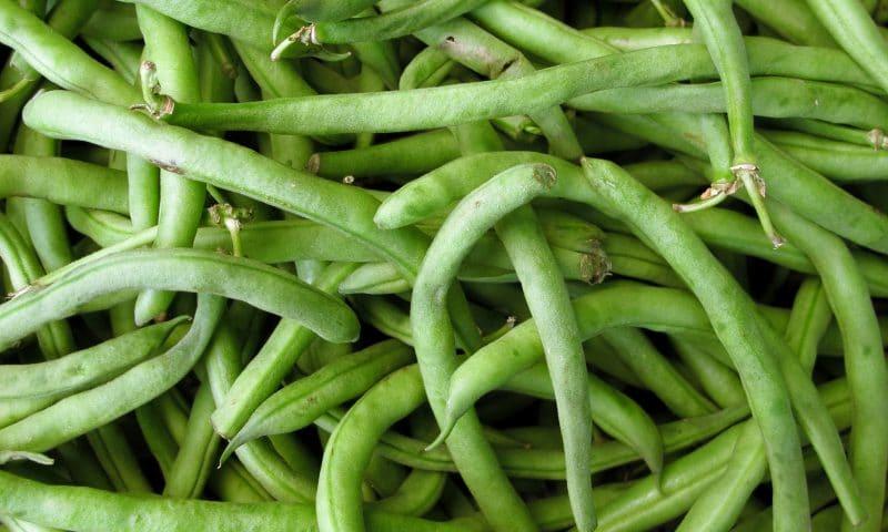 Cultiver des haricots verts à l'intérieur