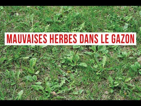comment se débarrasser des mauvaises herbes dans le gazon