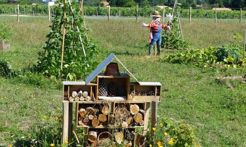 Débuter son potager en permaculture : STOP au bullshit !