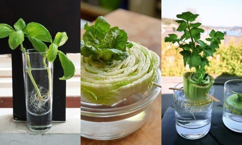 20 légumes que vous pouvez faire pousser à partir de restes