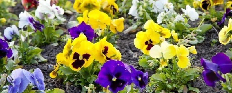 C'est l'heure des plantes vivaces de printemps !