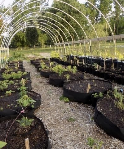 La laitue Bio dans votre jardin : une culture facile !