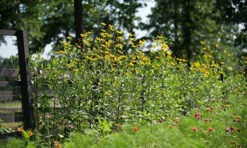 Dix conseils pour économiser de l'argent dans votre jardin