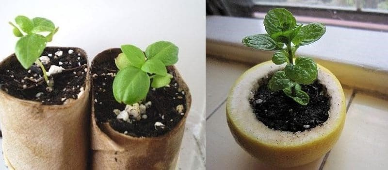 Jardinage : 4 moyens faciles de réutiliser les matériaux et les restes de nourriture