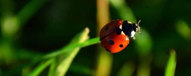 Les insectes et les plantes : Ce que vous avez et ce dont vous avez besoin