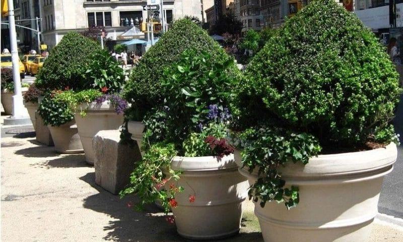 Pots d'arbres : Comment réussir à planter des arbres dans des pots