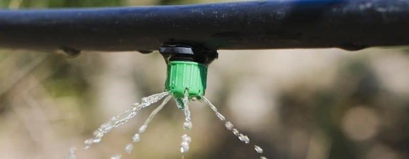 Recette pour un jardinage tolérant à la sécheresse