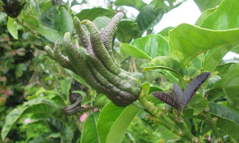 4 arbustes fruitiers originaux à planter IMMEDIATEMENT
