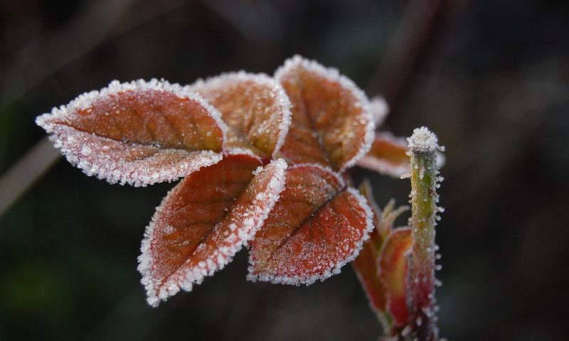 Conseils pour protéger vos plantes du froid, du gel et de l'humidité en hiver