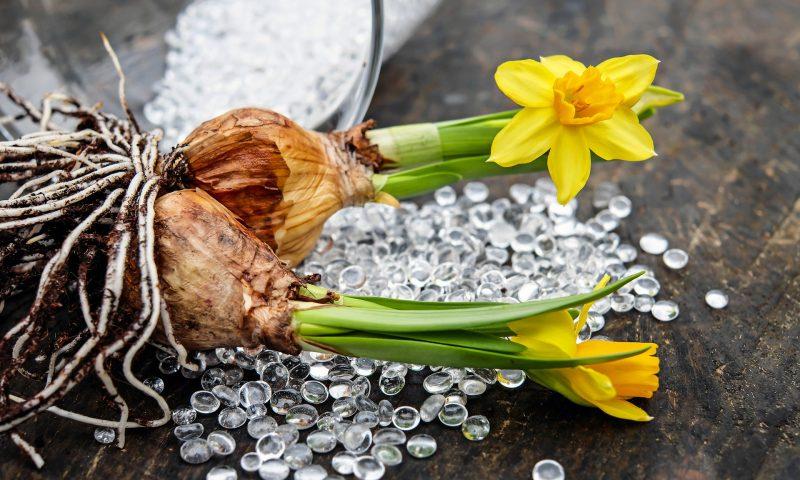 Les conseils pratiques pour les bulbes à fleurs