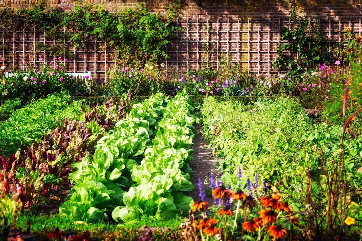 jardin potager fruits et légumes